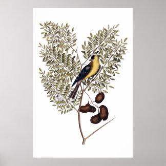 Poster Vintage botânico com pássaro amarelo