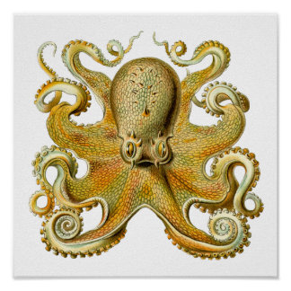 Poster Vintage Kraken, polvo Gamochonia, Ernst Haeckel