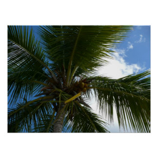 Pôster Vista acima à natureza tropical da palmeira do
