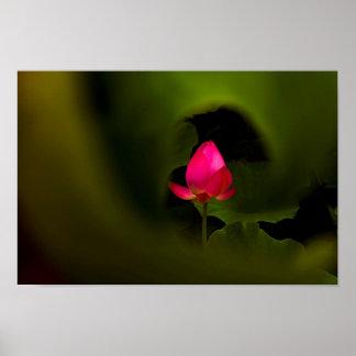 Pôster Você- arte fotográfica -7 do Fairyland de somente