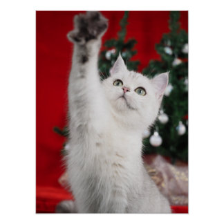 Pôster XMAS white Cat