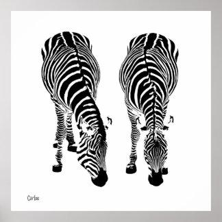 Pôster Zebras