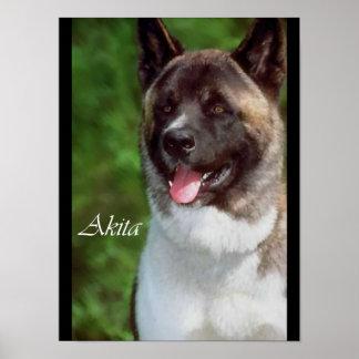Posters e impressões dos amantes de Akita