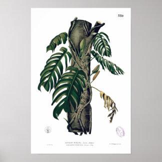 POTHOS? Poster tropical botânico da folha do