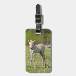 Potro do cavalo de Przewalski, Hungria Etiqueta De Bagagem