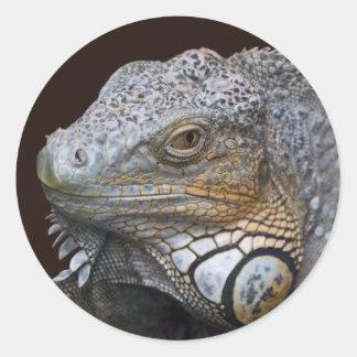 Pouca etiqueta do dragão