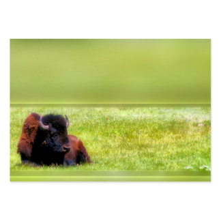 Prado do búfalo cartoes de visita