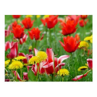 Prado do dente-de-leão e da tulipa cartao postal