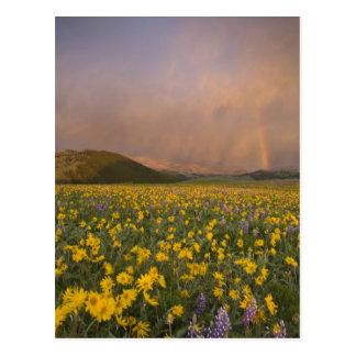 Prado espectacular do wildflower no nascer do sol cartão postal