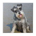 Praia bonita bonito da foto do cão diminuto do Sch Azulejos De Cerâmica