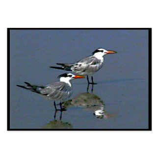 Praia do cacau, FL 2 Birds2004~1 pelo ~OE do ATC Modelo Cartoes De Visita
