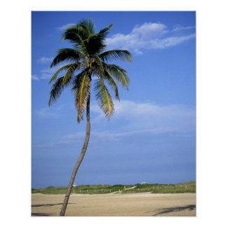 Praia sul, Miami Beach, Florida, EUA Posters