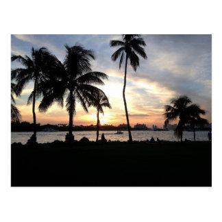 Praia sul, palmeiras de Miami no cartão do por do