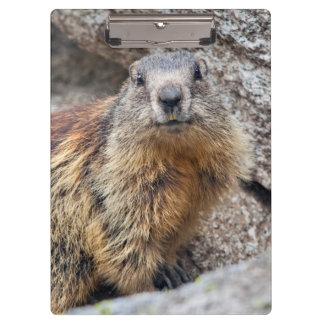 Prancheta alpina da marmota