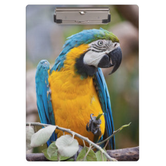 Prancheta azul e amarela do Macaw