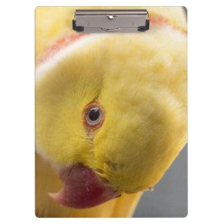 Prancheta companheira amarela