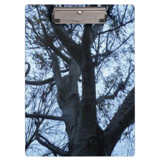 Prancheta da fotografia da silhueta da árvore