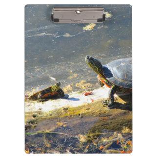 Prancheta da tartaruga