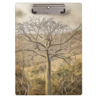 Pranchetas Árvore de Ceiba no distrito seco de Guayas da