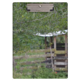 Pranchetas árvore e foto velha de florida do celeiro