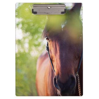 Pranchetas coleção do cavalo. primavera
