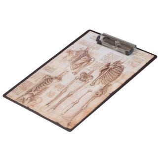 Pranchetas Esqueletos humanos da anatomia por Leonardo da