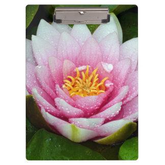 Pranchetas Flor cor-de-rosa do lírio de água