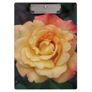 Pranchetas Floral cor-de-rosa do rosa da paz e amarelo bonito