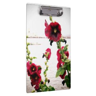 Pranchetas Hollyhock bonito floral