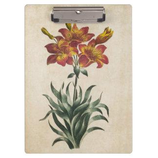 Pranchetas Ilustração floral botânica do lírio do vintage