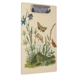 Pranchetas Insetos do jardim do vintage, borboletas, lagartas