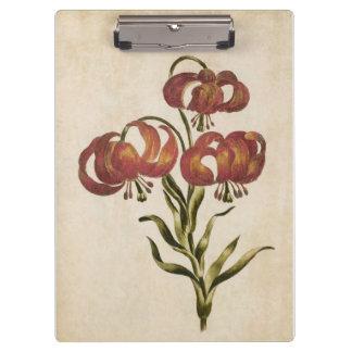 Pranchetas Lírio de montanha floral botânico do vintage