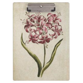 Pranchetas Lírio floral botânico de Guernsey do vintage