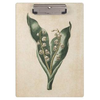 Pranchetas Lírio floral botânico do vintage do vale