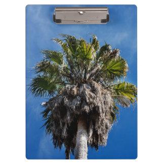 Pranchetas O conselho da palmeira e de grampo dos céus azuis
