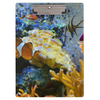 Pranchetas oceano do coral dos peixes do recife