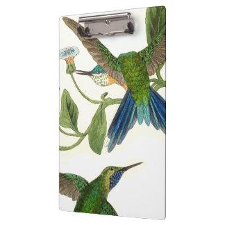 Pranchetas Os animais selvagens azuis dos pássaros do colibri