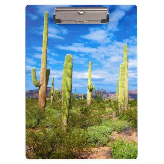 Pranchetas Paisagem do cacto do deserto, arizona