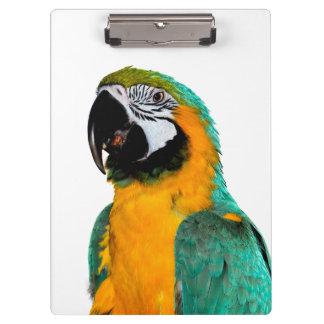 Pranchetas retrato colorido do pássaro do papagaio do macaw