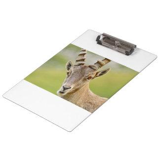 Pranchetas Retrato de um íbex