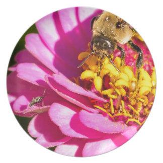Prato abelha e inseto que estão em uma flor roxa