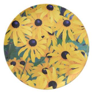 Prato Amarelo das flores de Susan de olhos pretos dentro