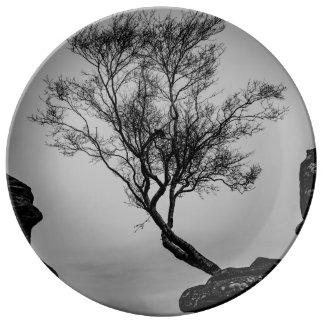 Prato Árvore em um penhasco