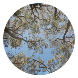 Prato Árvores de goma contra um céu azul