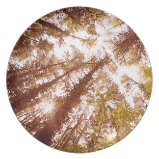 Prato Árvores do verão do vintage