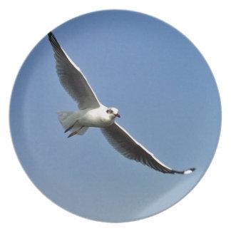 Prato As gaivotas são pássaros bonitos