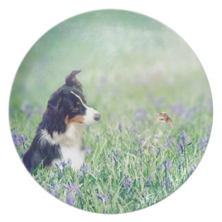 Prato Border collie e colibri