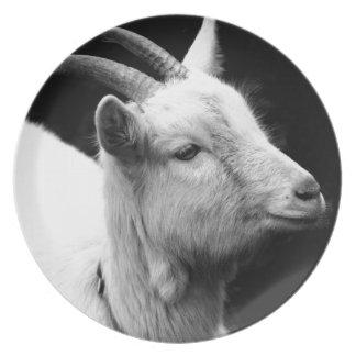 Prato cabra