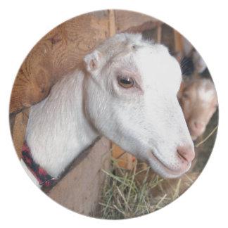 Prato Cabra branca