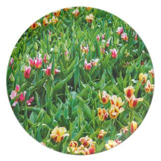 Prato Campo com as tulipas cor-de-rosa e amarelas